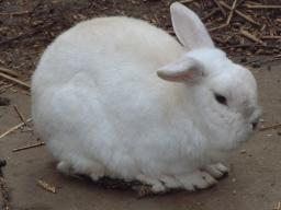 bunny rabbit from www.javajane.co.uk