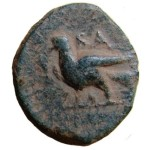 Ashkelon coin with dove